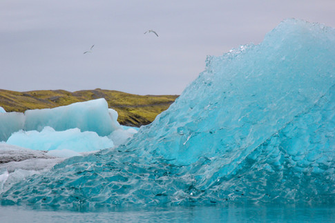 Glacial Birds, Iceland