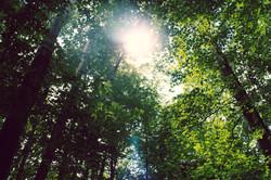 Vermont Forest