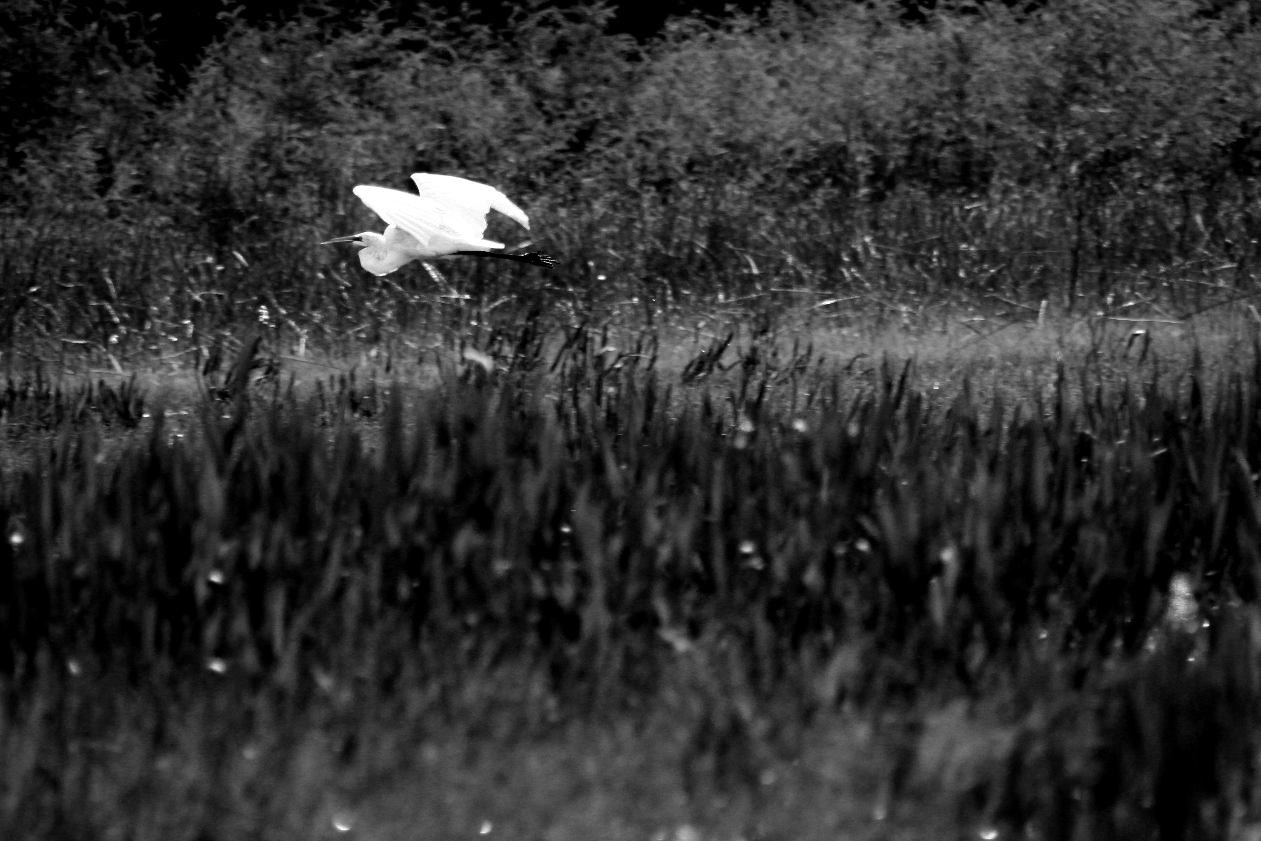 Everglade Crane