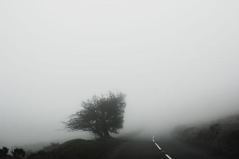 Exmoor Fog