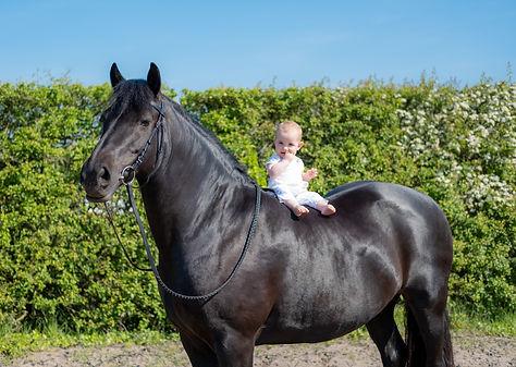 equestrian, horses, horse riding, formby, taleton, merseyside, lancashire, horse phoographer, equestrian photgrapher, liverpool photographer, childrens photgrapher liverpool