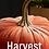 Thumbnail: Plush Pumpkin