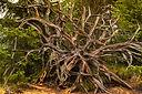 root-3873635_1920.jpg