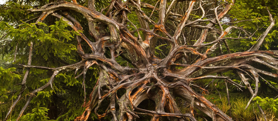 Deep, Bare Roots...