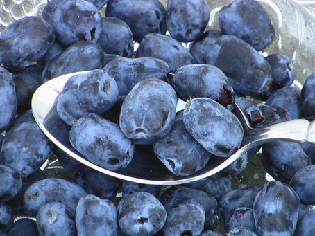 The Fruit of Longevity