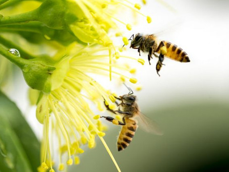 Are Bees Really That Important?