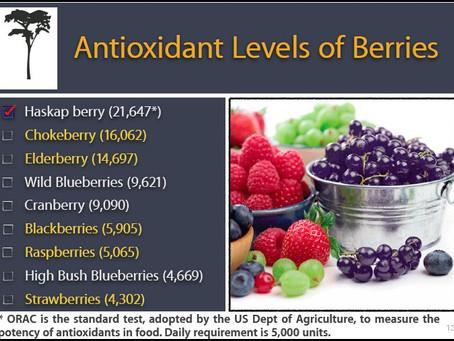 A Powerful Antioxidant
