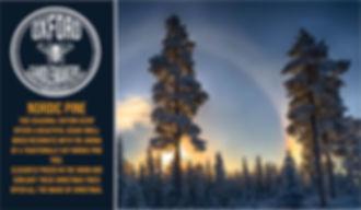 background Nordic Pine_edited.jpg