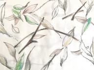 Unwritten law of fallen leaves
