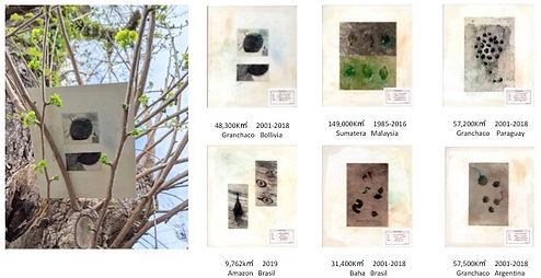 deforest-s1.jpg