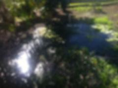 Ponding effluent.JPG