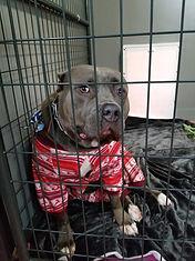Dog Bite Defense Attorney - Dog MOONLIGHT