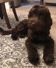 See Video of Ollie