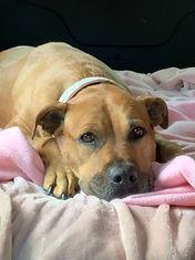 Penny's pet injury case
