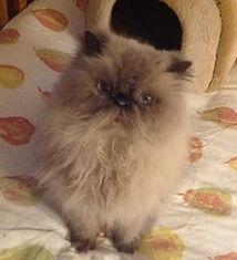 Cat Spencer's Custody case