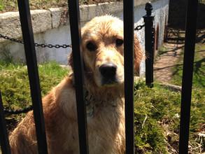 Doggie Jail