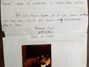 Lost in Spice:  Dealing with a missing pet