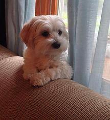 Pet Custody for BERNADETTE
