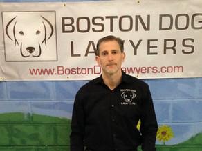 How I became a dog lawyer