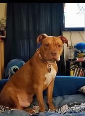 Dog Tanq's Story