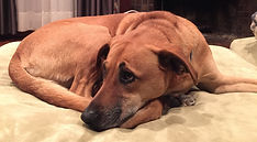 sophie's dog defence case