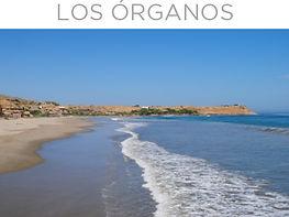 LOS ORGANOS.jpg