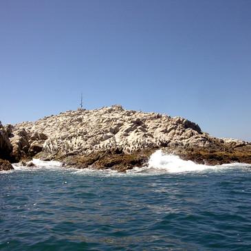 Ocean Excursions