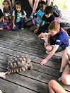 children tortoise 2.jpg