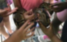 hands snake.jpg