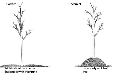 Tree Care Basics: Mulching
