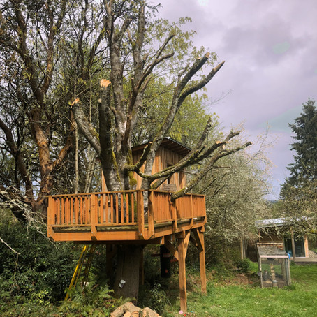 The Tree Upon the Tree House