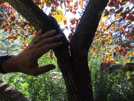 Cabling and Bracing in Small Trees