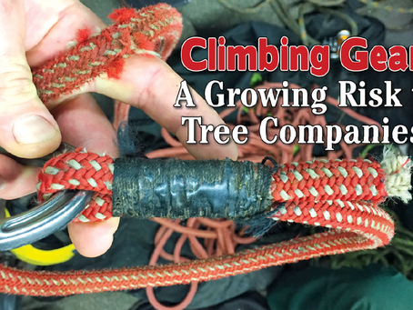 Climbing Gear: A Growing Risk to Tree Companies