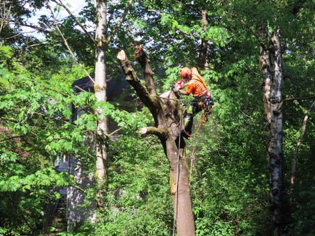 Create a Wildlife Snag in Your Landscape