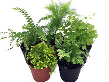 Terrarium Plants.JPG