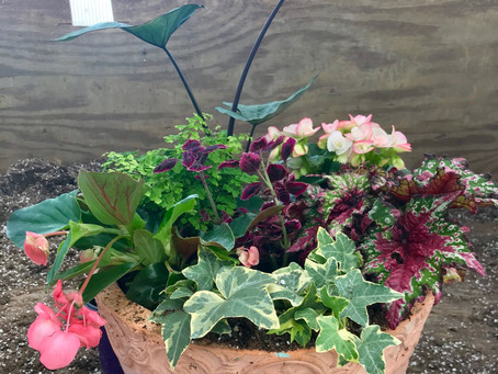 Planting for Shade