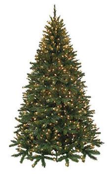 Evergreen Mixed Pine.JPG