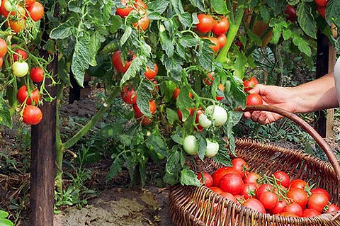 healthy-veg-gard_background2.jpg