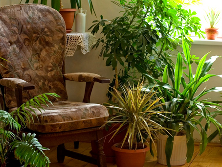 Transitioning Plants Indoors  for Winter