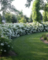 Hydrangea Incrediball PW.jpeg