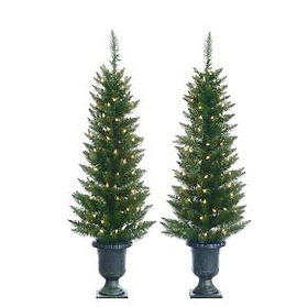 Potted Cedar Pine Tree (Set of 2).jpg