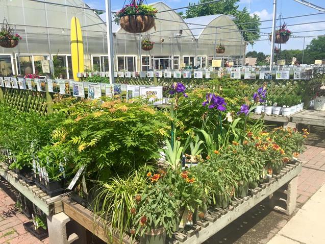 Perennials at Riverside