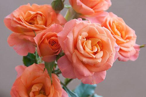 Good+Peach.jpg