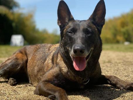 「トレーニングしてるのに愛犬の問題行動が改善されない」