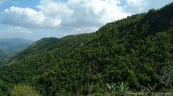 CLIFTON MOUNT