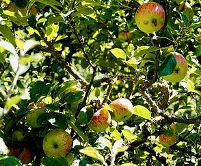 apple-orchard-1-1024x683.jpg
