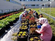 seed-the-city-urban-farm-1024x768.jpg