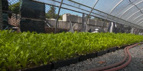 Greenhouse full of seedlings