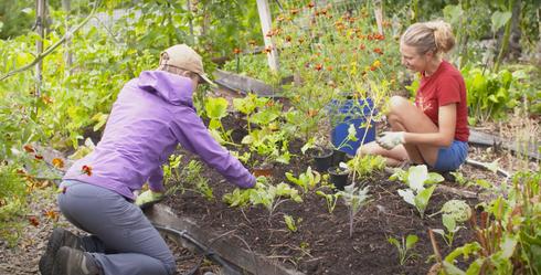 Two women tending a garden bed