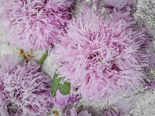 Lilac PomPom  - Poppy